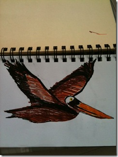 pelicandrawn