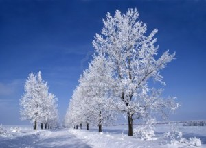 frozen-trees-around-the-road